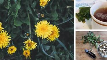 25 Reasons You Should Go and Pick Dandelions Right Now!
