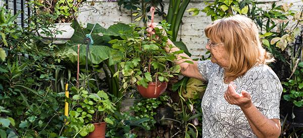 5 Medicinal Plants that My Grandmother Grew in Her Backyard