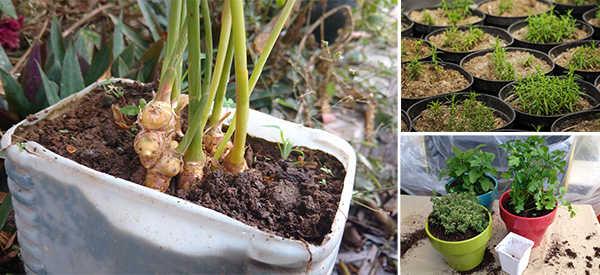 8 Medicinal Plants You Can Grow Indoors