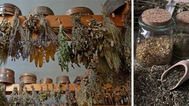 How To Properly Dry Plants for Medicine
