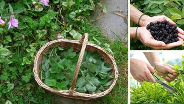 8 Medicinal Herbs You Should Be Picking This Summer