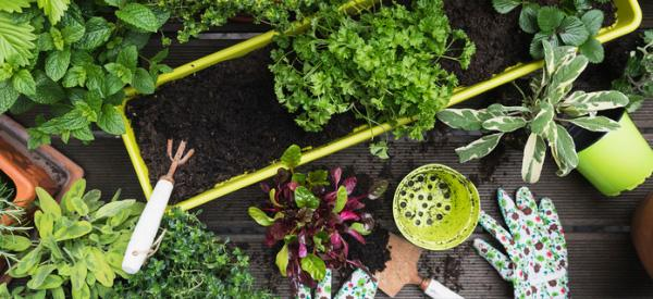 9 Herbs That Should Not Be Planted Together