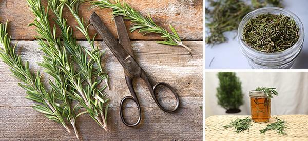 DIY Rosemary Memory Elixir