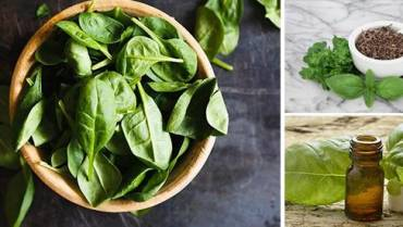 The Secret to Keep Basil Alive Indoors and How to Use It as a Medicine