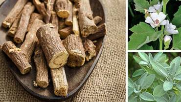 Best Herbs for Lungs and Respiratory Support