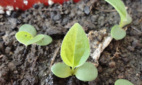 7 Medicinal Herbs You Can Grow In House