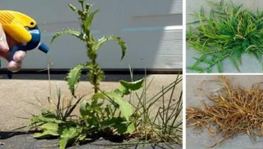 DIY Natural Weed Killer