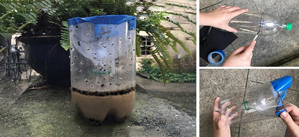 DIY Mosquito Trap That Really Works!