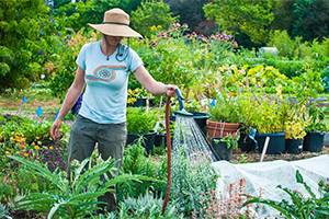5 Myths About Organic Gardening