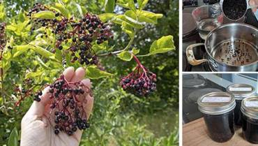 How to Make Immune Boosting Elderberry Syrup