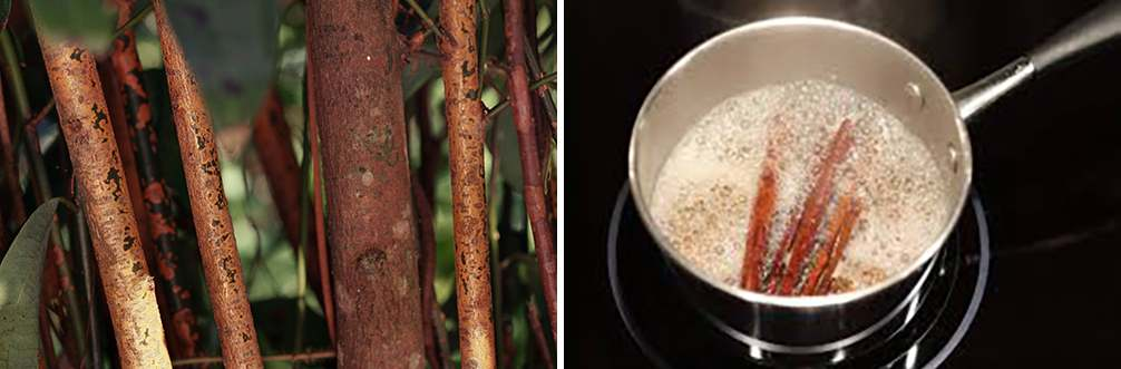 25 Little Known Medicinal Uses for Tree Bark - Cinnamon