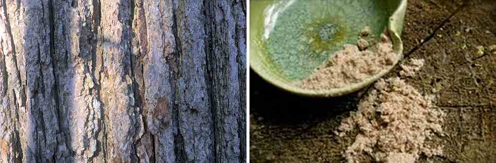 25 Little Known Medicinal Uses for Tree Bark - Slippery Elm