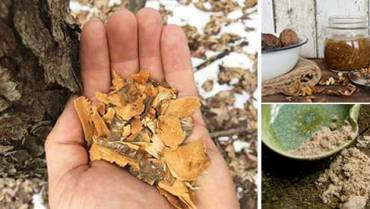 25 Little Known Medicinal Uses for Tree Bark