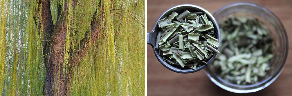 25 Little Known Medicinal Uses for Tree Bark - Willow