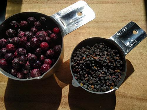 Elderberry Syrup with Echinacea and Goldenseal - Ingredients 2