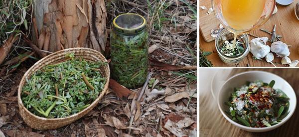 How To Make An Anti Inflammatory Herbal Jar (Pickled Purslane)