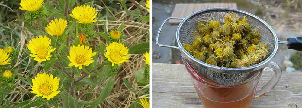 How to Make Your Own Natural First Aid Kit - Grindelia