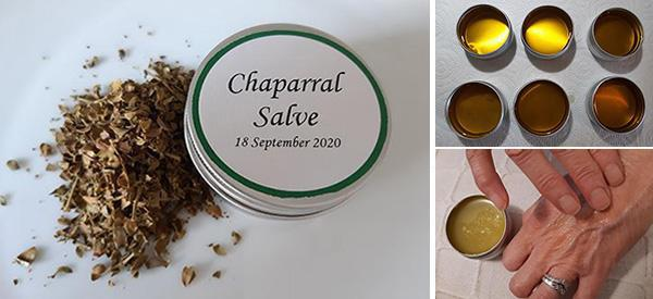 How to Make a Chaparral Salve for Wounds And Skin Infections