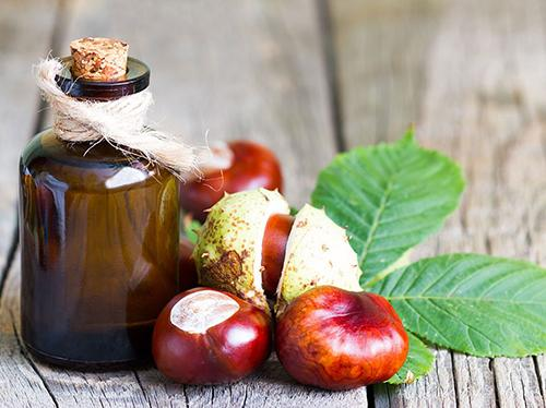 How to Treat Varicose Veins with Chestnuts - Oil
