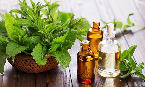 The complete list of essential oil substitutes- Peppermint