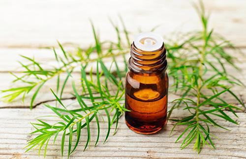 The complete list of essential oil substitutes- Tea Tree