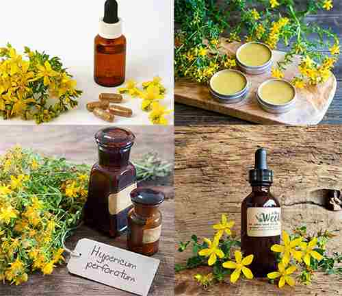 Plant of The Week - St John Wort Products