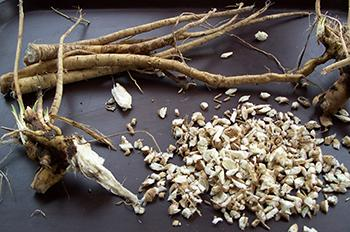 Plant of the Week Marshmallow - Harvest Roots