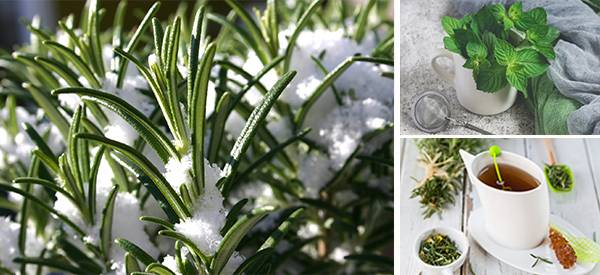 5 Winter Herbs To Cut Belly Fat