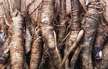 Burdock - Roots