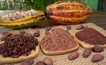 Herbal Coffee Substitutes You Can Drink Every Morning - Cacoa Nibs