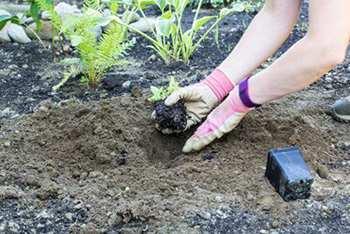 Grow Echinacea 2