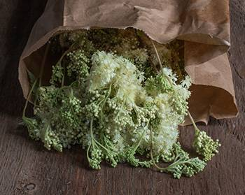 Meadowsweet - Harvest 2