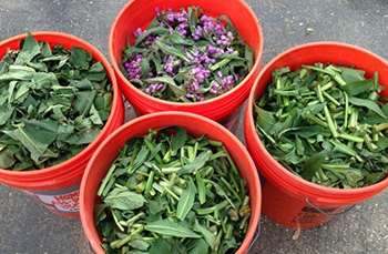 10 Things You Didnt Know About Comfrey -2. fertilizer