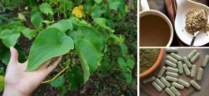 Kava The Most Powerful Herb To Reduce Stress - Cover