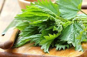 Avoid Spring Allergies with These 7 Natural Remedies - Stinging Nettles