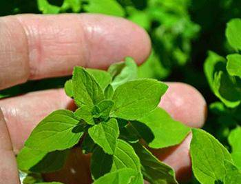 Do This Every Day to Improve Your Hearing - Marjoram