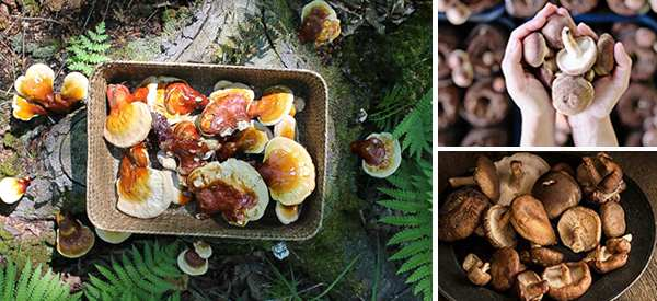 The Only 6 Medicinal Mushrooms You Need To Know