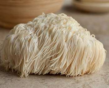 The Only 6 Medicinal Mushrooms You Need to Know - Lion's Mane