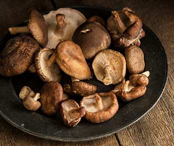 The Only 6 Medicinal Mushrooms You Need to Know - Shiitake