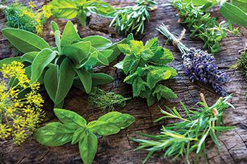 16 Medicinal Herbs You Should Grow Side by Side - Lavender
