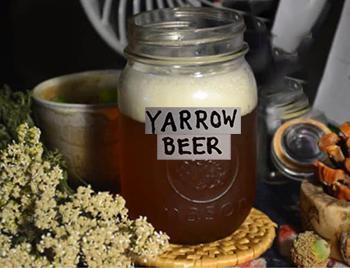 50 Ways to Use Yarrow - Beer