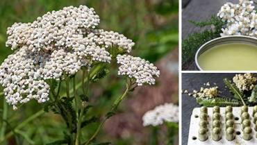 50 Ways to Use Yarrow