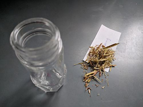 Cramp Bark Tincture for Muscle Aches, Cramps & Spasms - Step 1