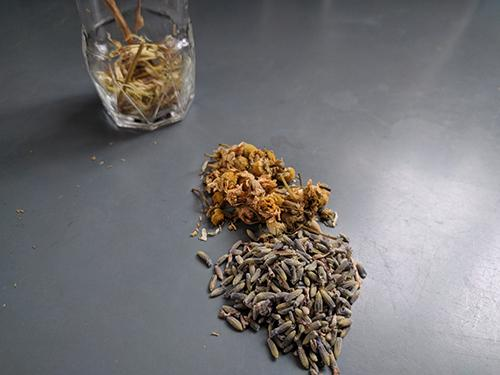 Cramp Bark Tincture for Muscle Aches, Cramps & Spasms - Step 3