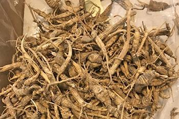 Healing Herbs You Can Smoke - Ginseng