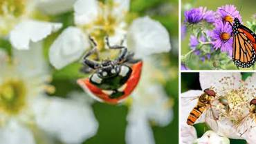 The Best Flowers to Attract Beneficial Insects to Your Garden
