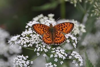 The Best Flowers to Attract Beneficial Insects to Your Garden - Yarrow