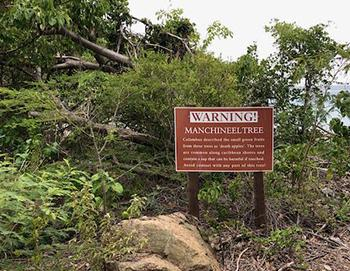 The Killer Tree You Should Never Have In Your Backyard - Manchineel Tree