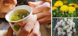 10 Herbs That Kill Viruses and Clear Lungs - Cover