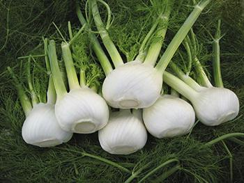 Fennel - History